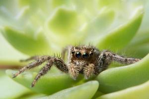 araña en una hoja verde