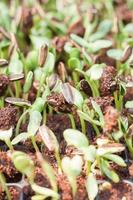 Close-up of sprouts