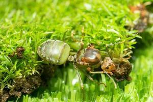 hormiga verde en la hierba