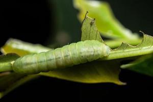 Worm on a leaf, close-up photo