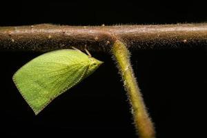 mariposa verde en un árbol