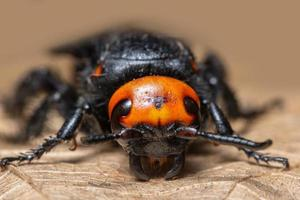 insecto en hoja seca