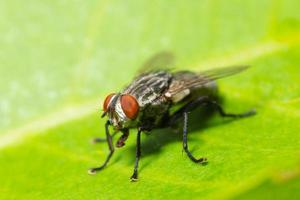 Fly on a leaf photo