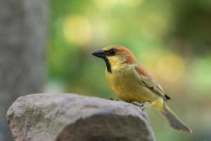 pájaro en una roca foto