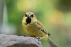 Bird on a rock photo