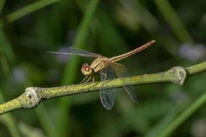 Close-up of a dragonfly photo