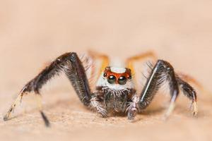 Spider on a dry leaf photo