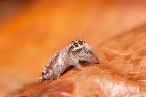 araña en una hoja seca foto