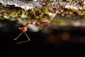hormiga en una rama