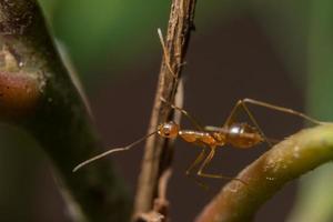hormiga en una hoja
