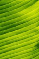 Green leaf, close-up photo