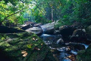 bosque en el parque nacional de la cascada khao chamao foto