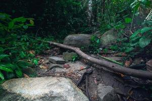 Rocks and lush tropical forest vegetation photo