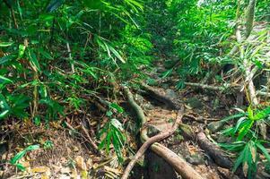 Lush tropical forest vegetation photo