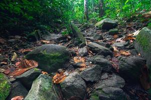Rocks in the forest photo