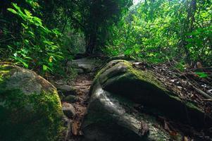 Lush forest vegetation