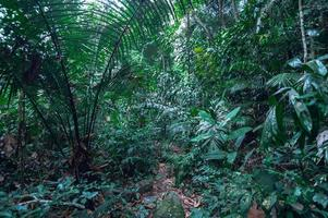 Lush tropical forest vegetation