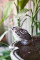 Sparrow on a potted plant