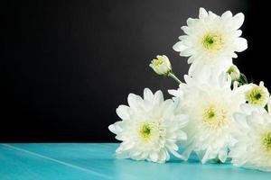 White chrysanthemum flowers on a blue table