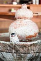 Close-up of a sparrow on a fountain