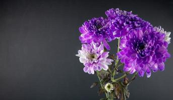 Bouquet of purple and white chrysanthemums with copy space