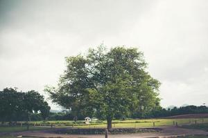 Portrait of big tamarind tree