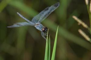 Dragonfly on a plant photo