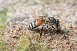 Bee feeding on the ground