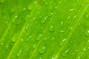 gotas de agua en una planta foto