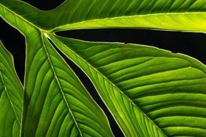 Green leaf background, close-up photo