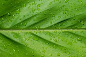 Wet leaf background