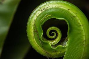 planta verde sobre fondo negro foto