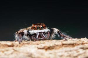 araña en un árbol