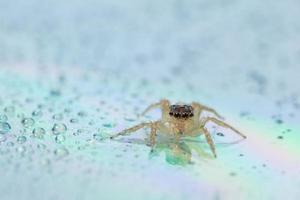 Spider on wet surface