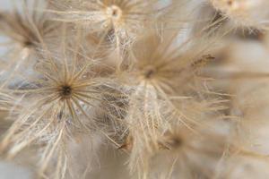 Wildflower, close-up photo