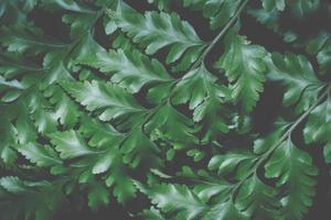 fondo de hoja verde, primer plano