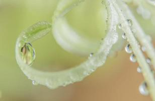 Water drops on a plant photo