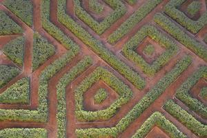 Green geometric garden photo
