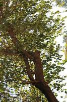 hojas verdes en un árbol foto