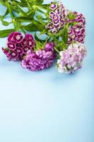 Purple carnations on a blue background with copy space