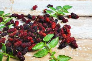 Mulberries and leaves photo
