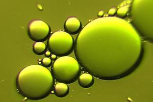 Green colored oil bubbles in a liquid