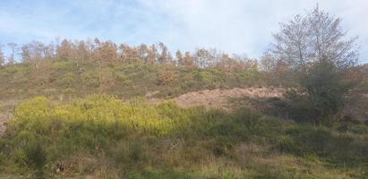 bosque paisaje natural foto