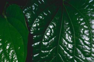 Green leaves with dark tone background