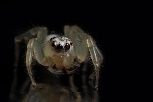 araña sobre fondo negro