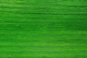 fondo de hoja verde