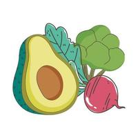 avocado beet and broccoli fresh nutrition healthy food isolated icon design vector