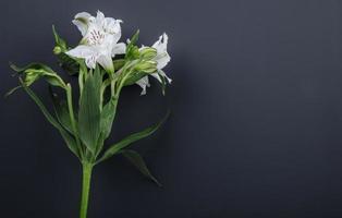 Flores de alstroemeria blancas sobre fondo negro con espacio de copia foto
