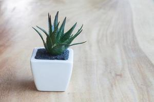 Plant in pot on a wooden table photo