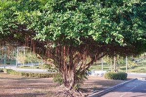 árbol grande cerca de una carretera